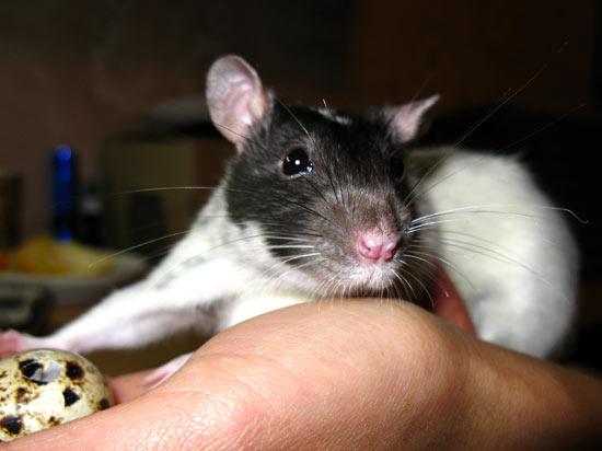 http://rats.org.ua/docs/Kroha001.jpg